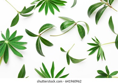Abstract pattern of green leaves, plants on a white background. Minimalistic natural concept. View from above, flat