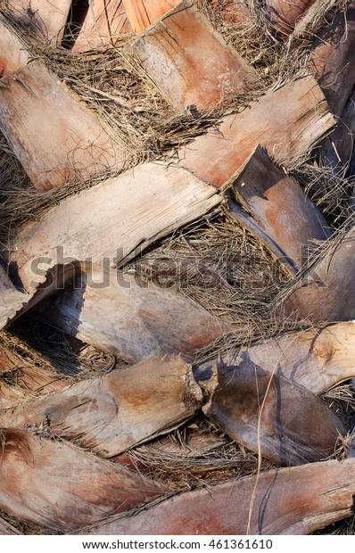 Abstract pattern of palm tree trunk close up
