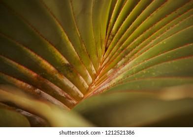 Abstract pattern of a thorny leaf / Abstraktes Blatt mit Stacheln