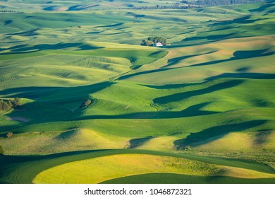 Abstract patterns of green fields in the Palouse region of eastern Washington state