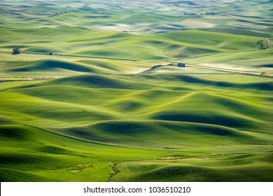 Abstract patterns of green we feel in the Palouse region of eastern Washington state