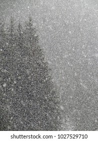 Abstract patterns of snowfall on winter conifer forest, Chatel, France
