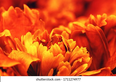 Abstract petals of a orange flower on sun