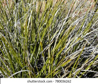 Abstract photo of an autumn high desert grass bouquet; Tonto National Forest in Arizona