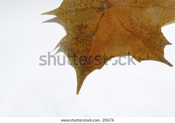 Abstract photo of an autumn leaf