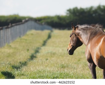 An abstract photo of a bay horse stood in a paddock with a fence line going into the distance.