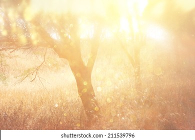 abstract photo of light burst among trees and glitter bokeh.