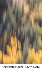 Abstract photo of trees showing autumn fall colors