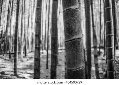 Abstract photos of the bamboo forest in Kyoto, Japan
