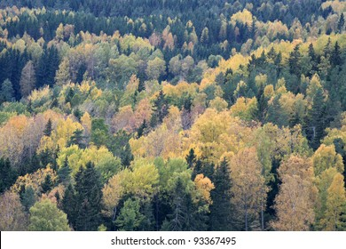 Abstract picture of autumn colors in forest.