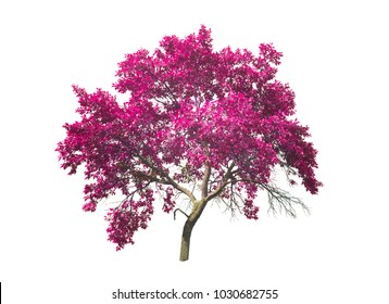 abstract pink or purple tree isolated on white background
