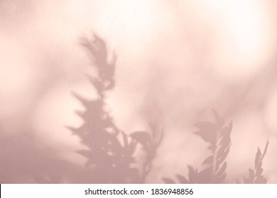 Abstract plant and leaves pink shadow blurred background. Natural leaves tree branch  pink rose gold shadows and sunlight dappled on white concrete wall texture for background wallpaper and design