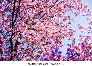 Abstract psychedelic background of  the blooming  spring  trees.Pink sacura in  a park.Art work for creative design