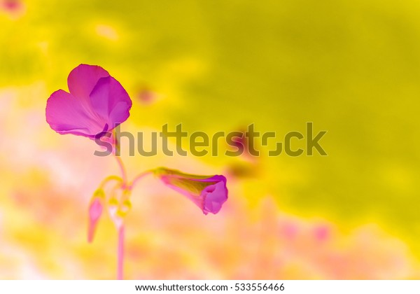 Abstract purple flowers with blurred background.