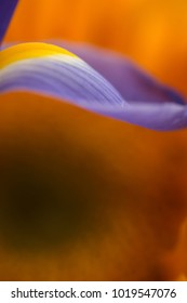 Abstract purple iris petal with an orange background with space for text