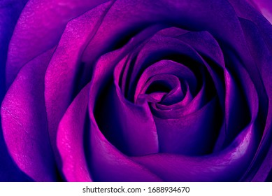 Abstract Purple Rose Wallpaper Background