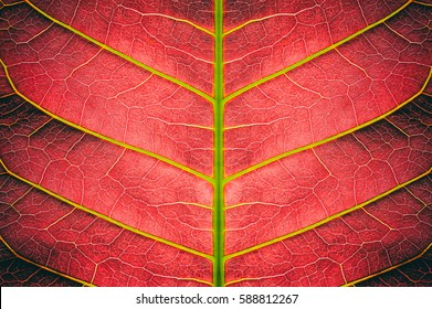 abstract red striped of foliage from nature, detail of leaf textured background