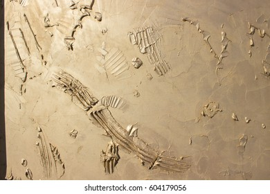 Abstract remains of prehistoric animals