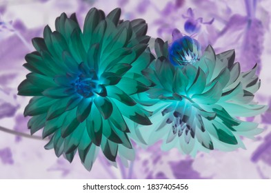Reversed Color Images Stock Photos Vectors Shutterstock