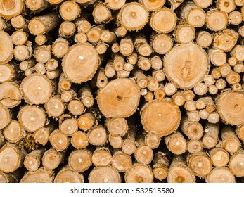 Abstract round teak of Wood circle tree stumps background.