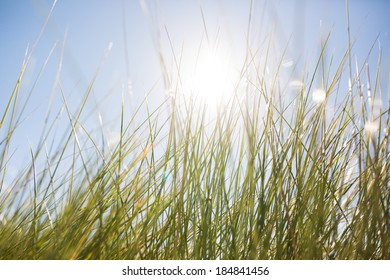 Abstract Sea Grass Background