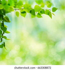 Abstract seasonal backgrounds with beech trees and beauty summer texture