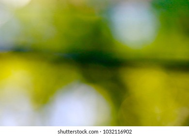 An abstract of shades of green that look as if they are trying to come into focus.