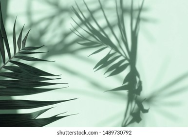 Abstract shadow background of natural leaves tree branch falling on neo mint color wall texture for background and wallpaper.