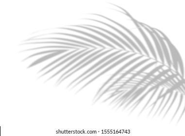 Abstract shadow black white palm leaf shadow on a white wall Background. Blank copy space. - Shutterstock ID 1555164743
