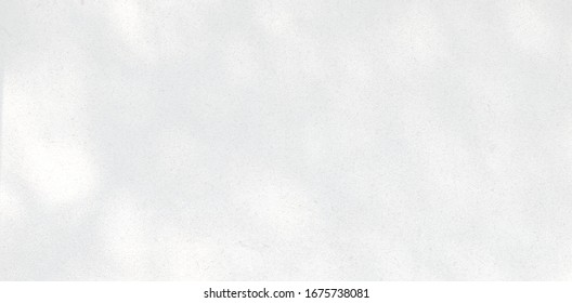 Abstract Shadow. blurred background. gray leaves that reflect concrete walls on a white wall surface for blurred backgrounds and monochrome wallpapers.