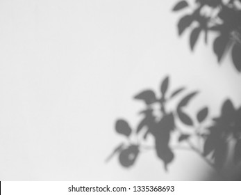 abstract shadow of the leaves on a white wall background