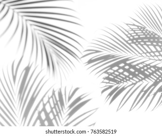abstract of shadows palm leaf on a white background.