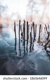 abstract shot of cut, brown reeds on a frozen pond of dark blue water with a nice reflection photographed in the transition between fall and winter on a cold morning