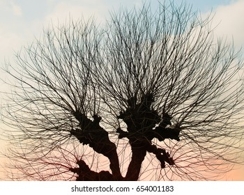 Abstract silhouette image, Leafless branches of tree against sky