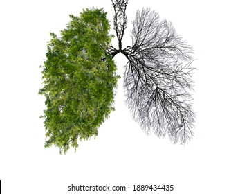 Abstract silhouette of lungs on a white background . Trees are the lungs of the planet. Air purification. Ecological concept. Tree branch. The concept of pneumonia and bronchitis.