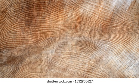 Abstract, slightly cracked texture in the wood of a very thick tree trunk