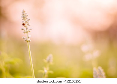 Abstract soft blurred background and vintage over light flowers in garden. (focus soft)