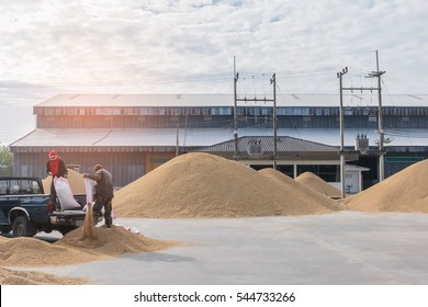 Abstract soft blurred and soft focus of farmer pouring rice seed from sack, the dry method, how to oven heat, how to containment rice seed in the big sack.By the beam, light and lens flare effect tone