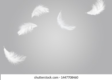 abstract, soft white feathers floating in the air. grey background