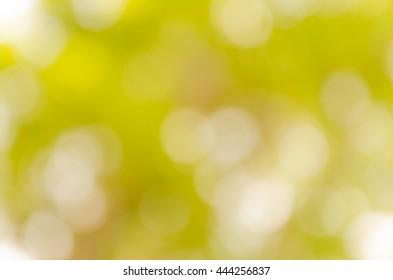 Abstract spring background. Green natural background of out of focus forest or bokeh.