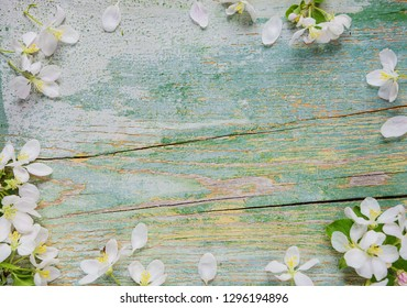 Abstract spring background of old painted blue board with frame of white apple flowers