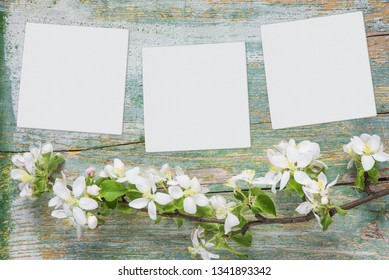 Abstract spring background of old painted blue board with branch of flowering apple branch covered with white flowers and three white square blank paper sheets or canvas with place for text