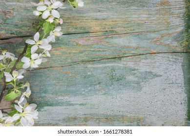 Abstract spring background of old painted blue board with flowering apple tree branch covered with white flowers