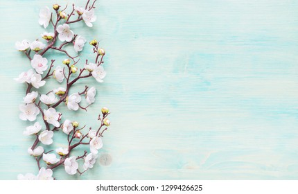 Abstract spring background of painted blue board with branch of flowering cherry branch covered with white flowers