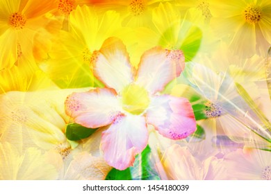 abstract  spring  flower  nature   background