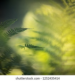 Abstract square photo with green fern and pleasant blurred natural background