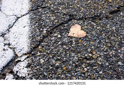 Abstract street photography of isolated heart shaped leaf on concrete asphalt ground. Minimal outdoor urban photography. Blacktop gravel road with cracks on pavement.