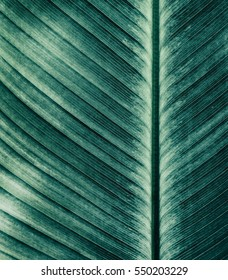 Abstract striped natural background, Details of banana leaf, Vintage tone