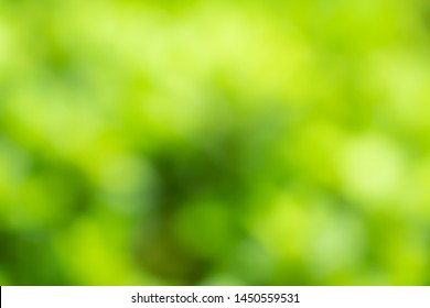 abstract summer background green bright, nature backgorund