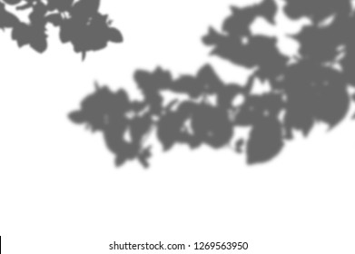 abstract Summer background of shadows branch leaves on a white wall. White and Black for overlaying a photo or mockup